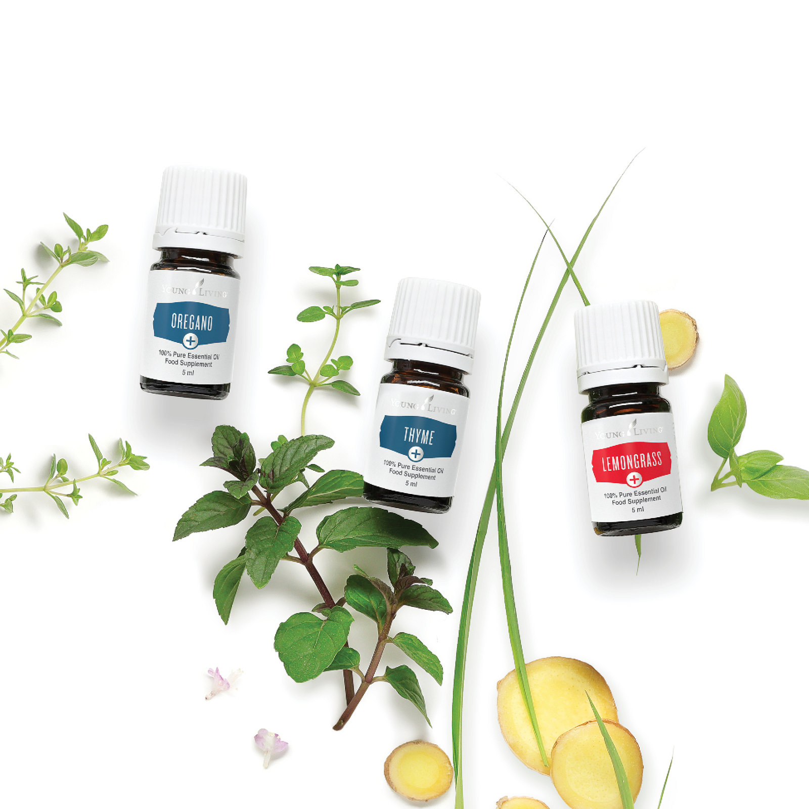 vitality herbs oregano thyme lemongrass
